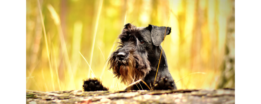 Comida para perros | Neonatural