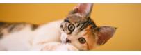 Comida gatos | Neonatural